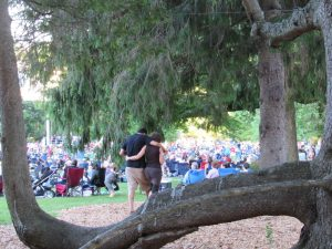 Odd tree Tanglewood, June, 2016. Photo: Dave Read, BerkshireLinks.com.
