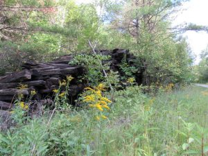 Disused railroad ties across from Donald Hall's Eagle Pond Farm, Wilmot, NH; June 2015 photo by Dave Conlin Read.